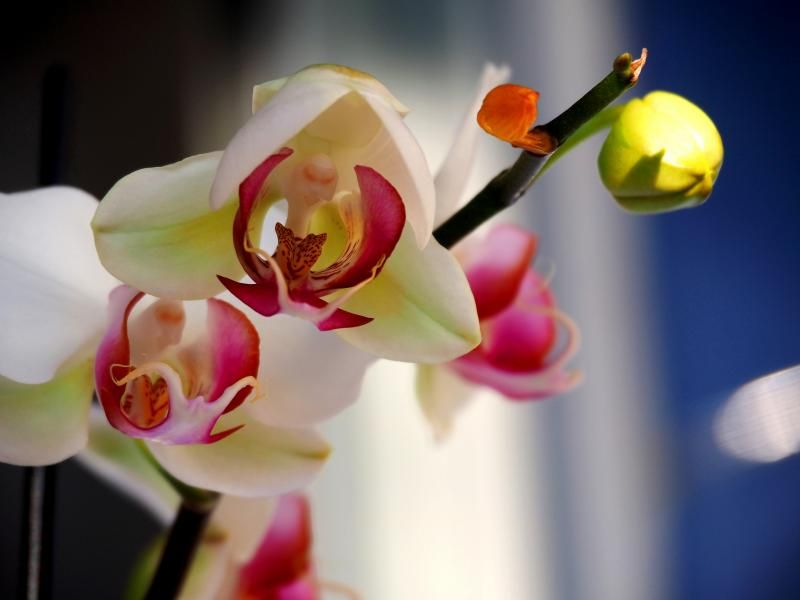 Encore les orchidees!! P9100008_zpsb1ec0e2f