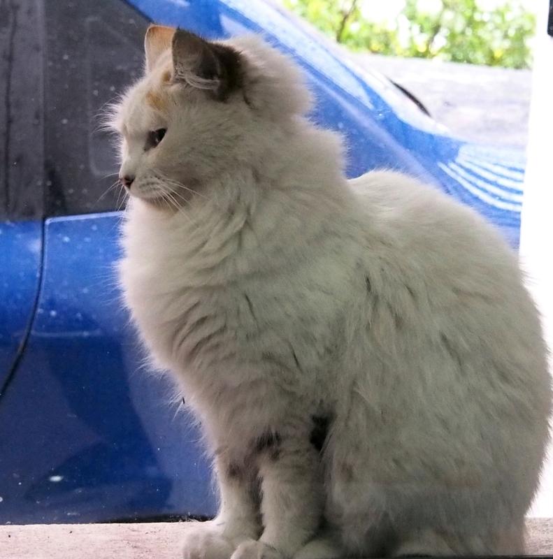 Les chats adoptifs!! PA020004_zpsvcz8ko5e