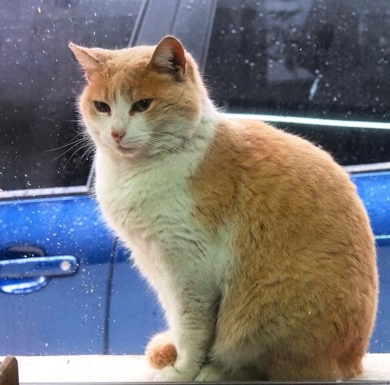 Les chats adoptifs!! PA020005_zps5fxh8mk8