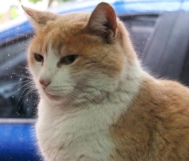 Les chats adoptifs!! PA020007_zpsx0ia2qcg
