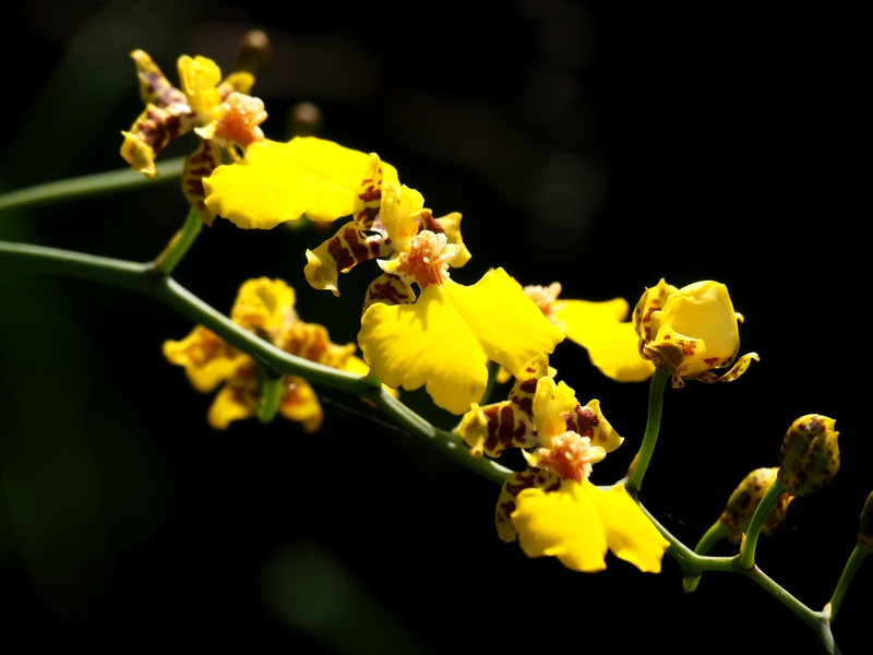 Orchidées a la ferme PA120026_zpsmsc3ghqs