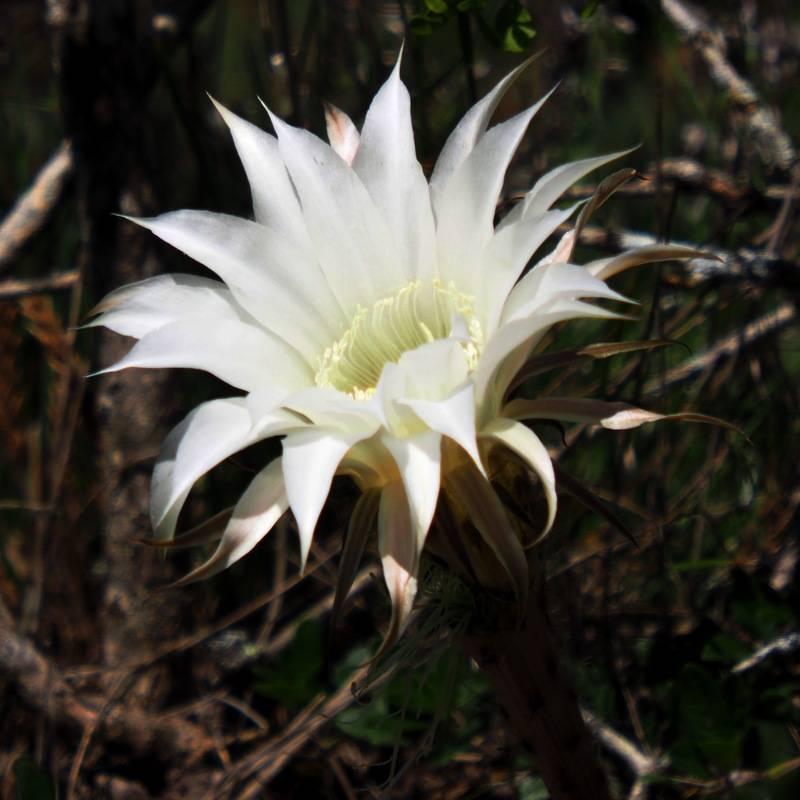 Fleur de cactus(Ajoute)++ PA300040_zps7mdwjrsf