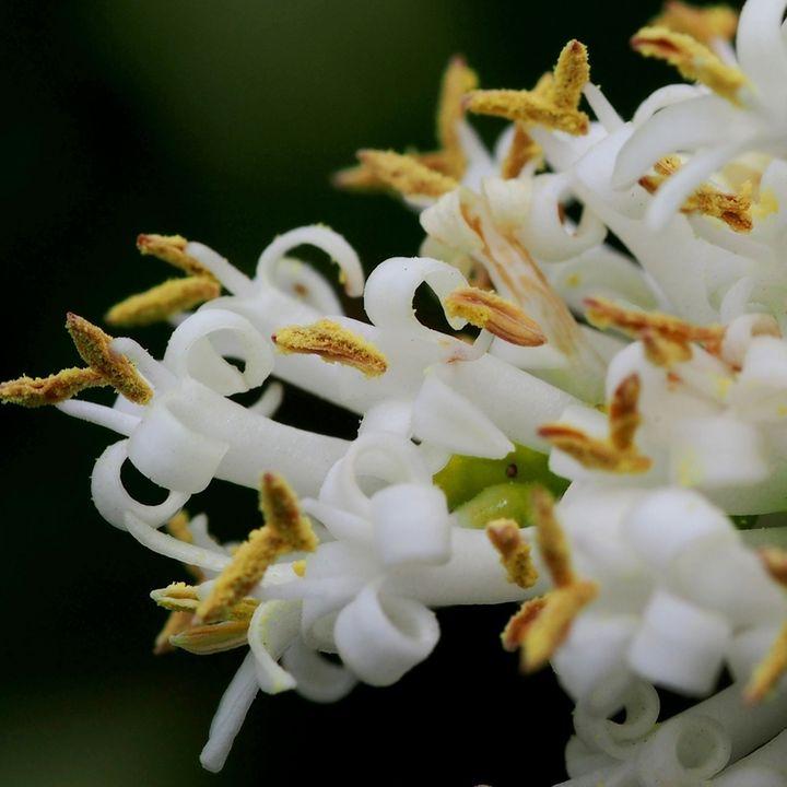 Quelques fleurs du jardin PB030001_zpsb9pxlwe0