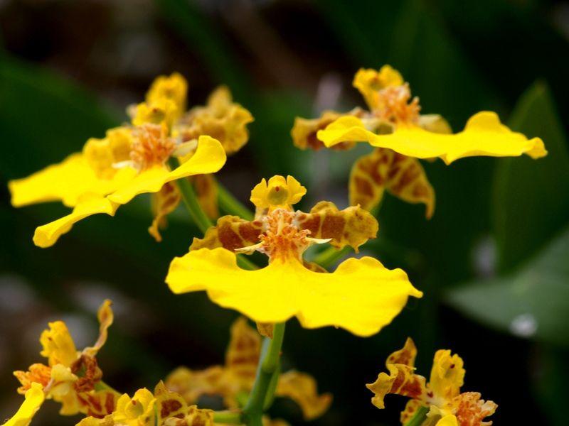 Quelques fleurs du jardin PB030008_zpsqsvodxdp