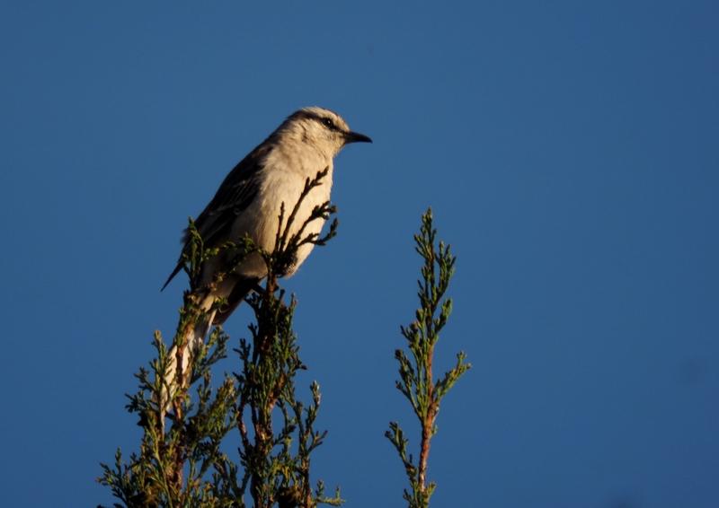 Oiseaux le soir!! PB050011_zpsi2wjwho1