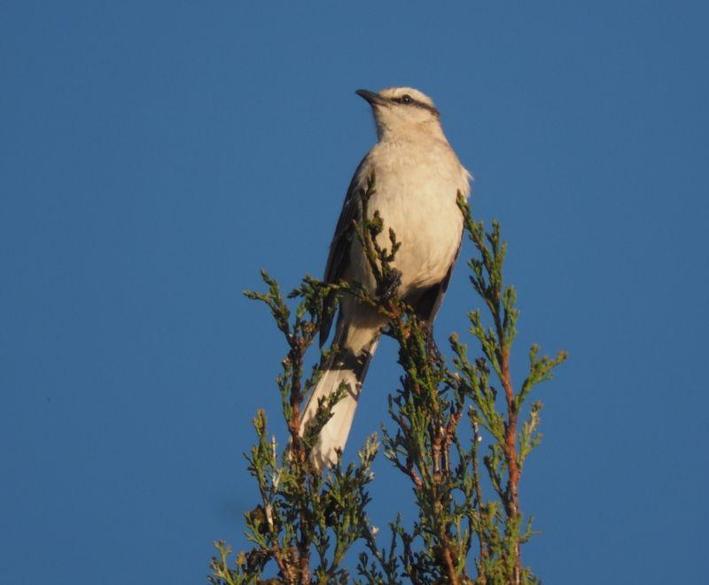 Oiseaux le soir!! PB050013_zpsojdltkzf