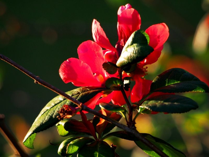 Fleurs et soleil PB080008_zpsoenk1fhl