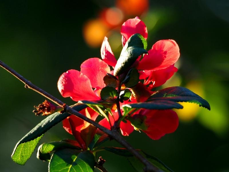 Fleurs et soleil PB080010_zpswdq1wavu