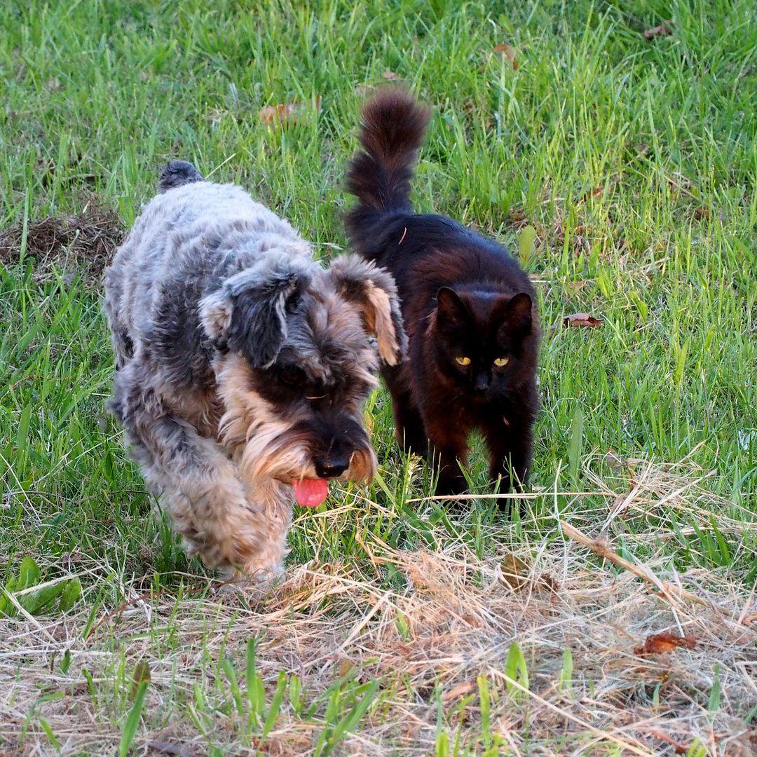 Baloo et Michi!! PB080013_zpslzag3olw