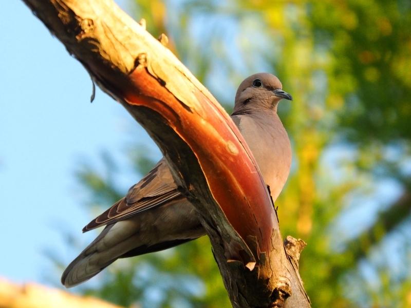Pigeon!! PB110017_zpsybgjx8ze