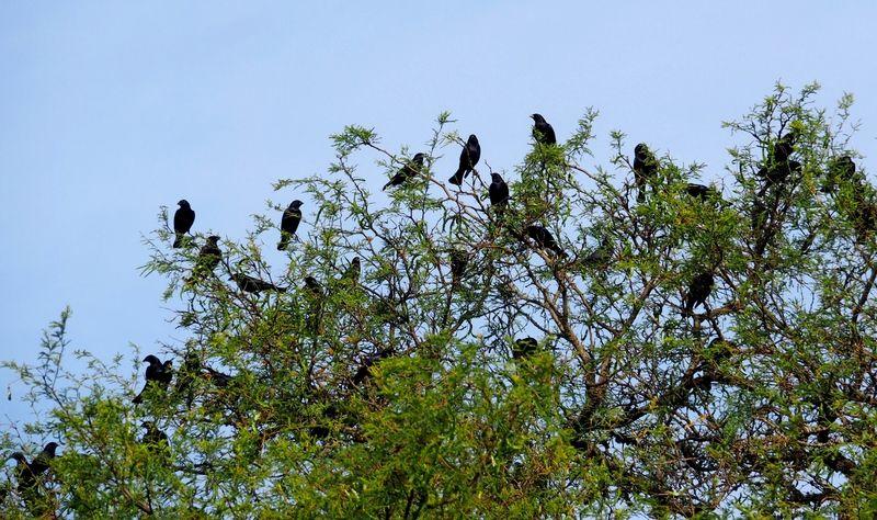 Les Oiseaux!! PC090002%202_zps2s3hjopj
