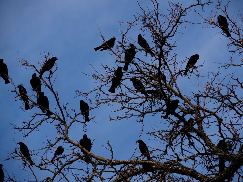 Les Oiseaux!! PC090004_zpsg7uyghne
