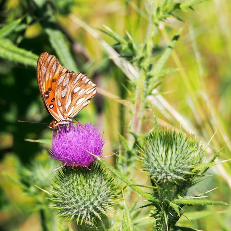 Et un papillon.. PC140041_zpsdc9193f8