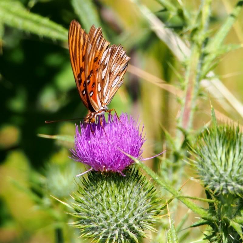Et un papillon.. PC140042_zps06926986