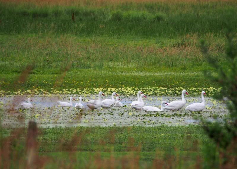 Au Lac de la route PC160006_zps97dcaf44