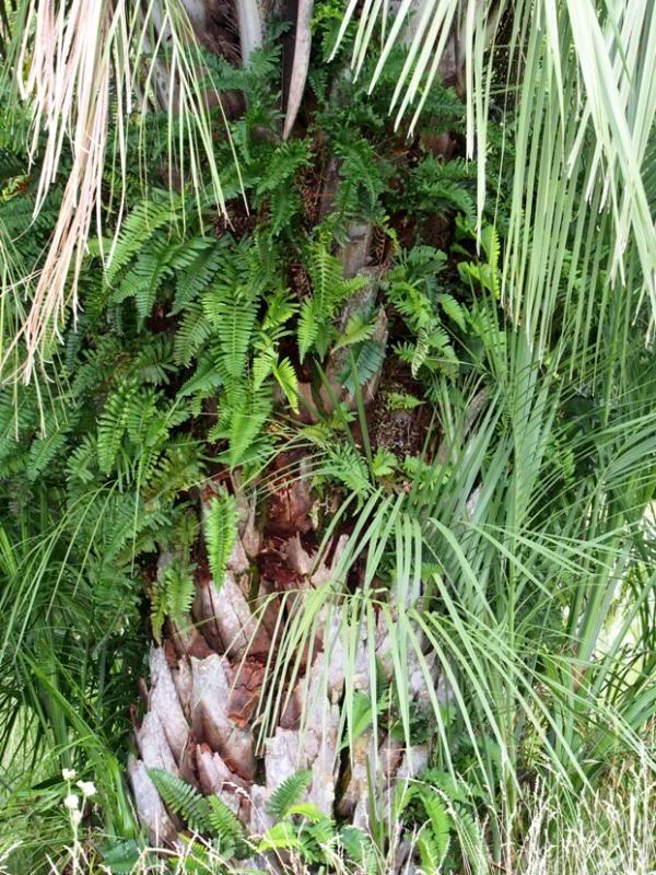 Flore sur palmier.. PC170010_zps40de764b