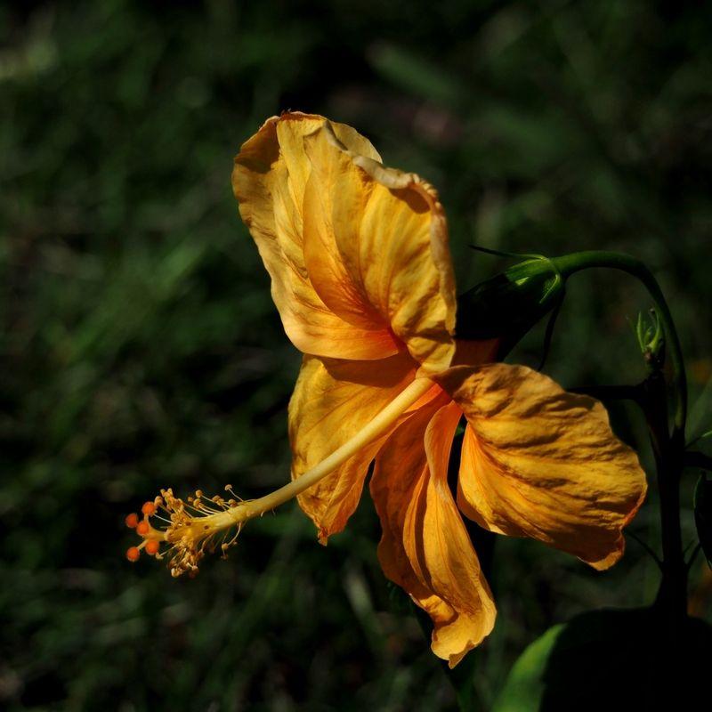 Fleurs du jardin encore!! PC200008_zpsiugtsune