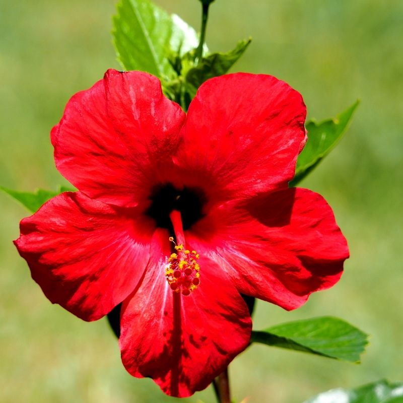 Fleurs du jardin encore!! PC200014_zpsluctbdiw