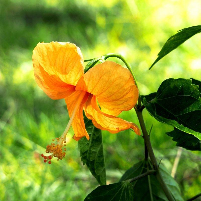 Fleurs du jardin encore!! PC200017_zpsd0w21jva