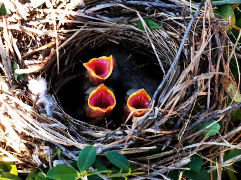 Le nid!! PC230001_zps09e1346b
