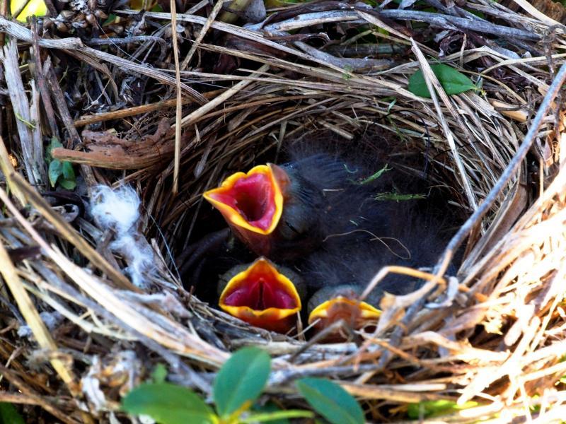 Le nid!! PC230002_zps886c00e0