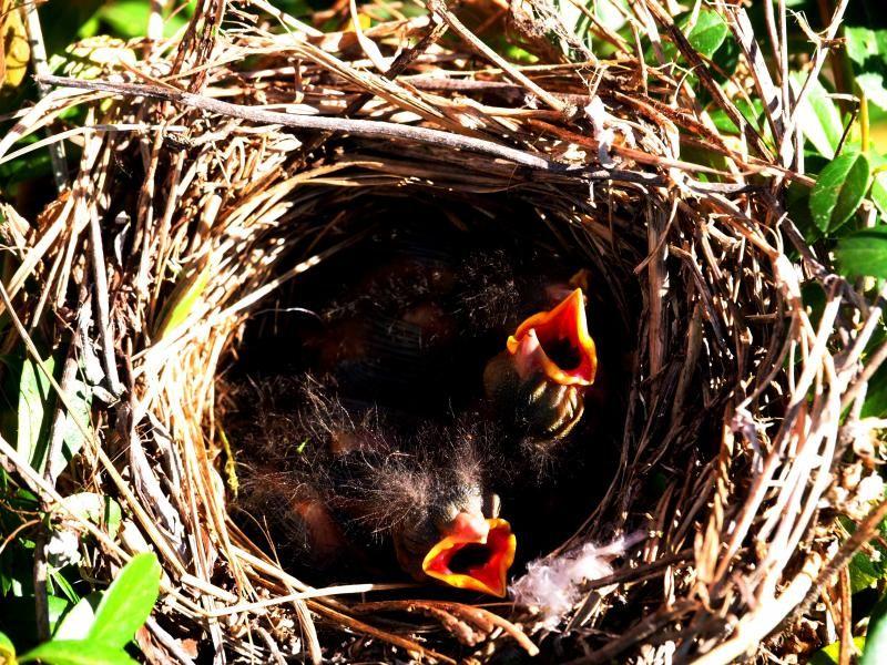 Le nid!! PC230006_zps2560e104