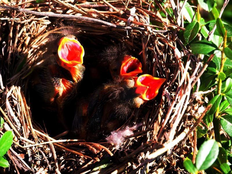 Le nid!! PC230007_zps4ea9aa79