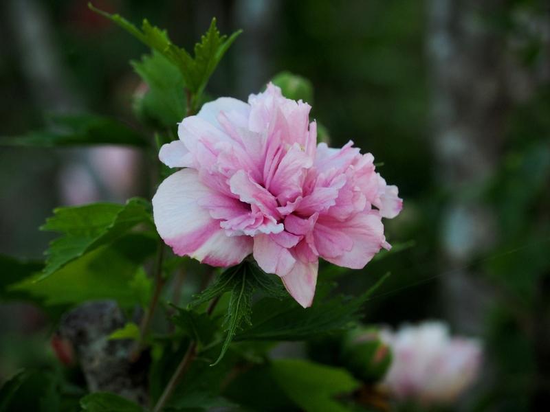 Une fleur!! PC240005_zpskemxbjhw