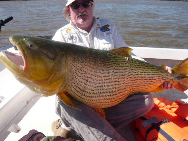 Poissons du fleuve Uruguay(Ajoute!!) Donald_3_20110402_1554096556_zps04311e0c
