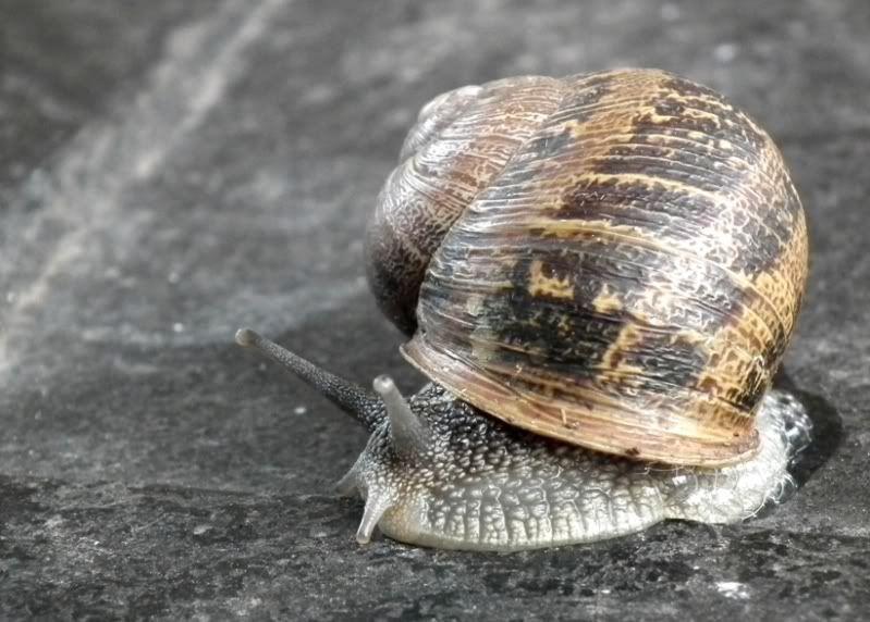 Escargot!!(Helix...) DSCF0818