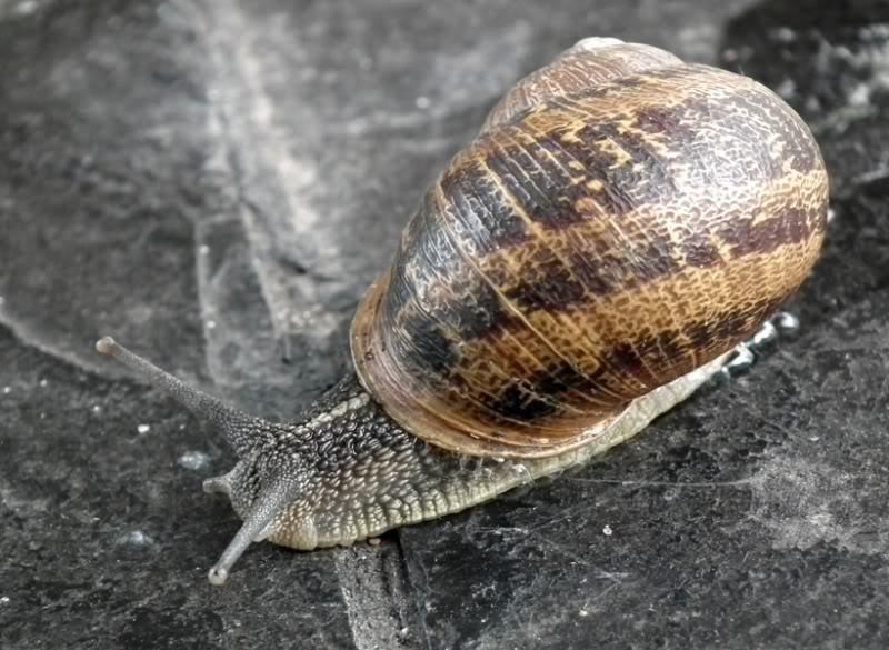 Escargot!!(Helix...) DSCF0821