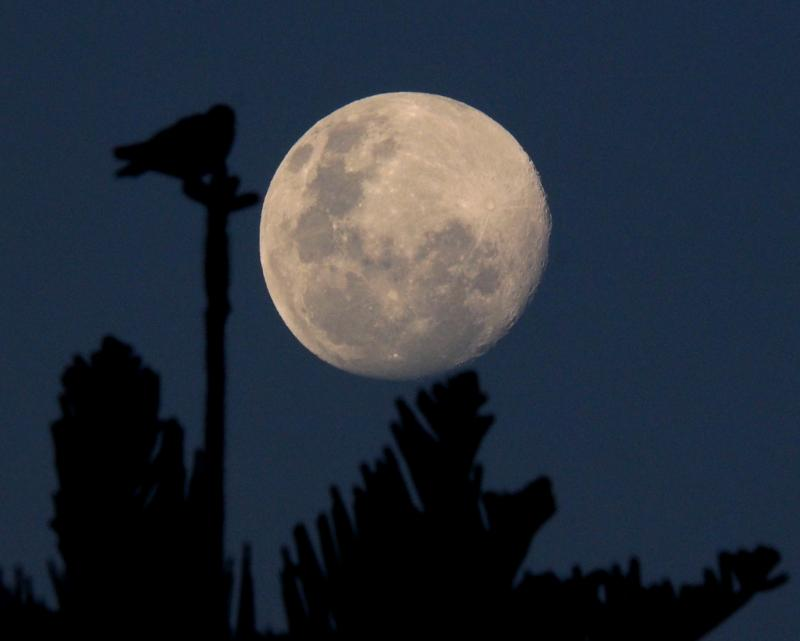 Lune du 13 Aout avec deux objectifs(Ajoute) P7100027_zps4a121417