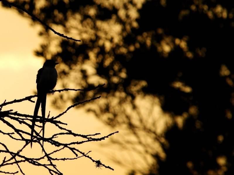 Oiseaux du Jardin XPC191978-