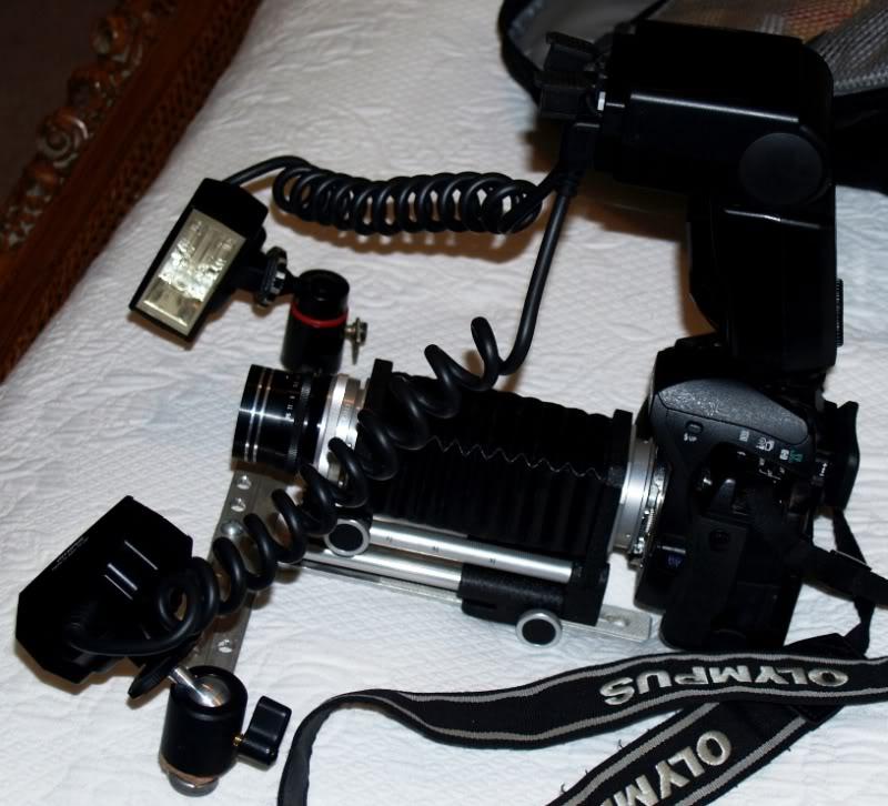 Stylus 1, autre technique d'éclairage en macro. P7172311