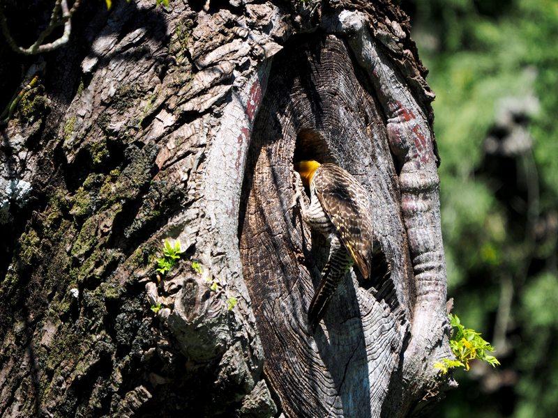 Le nid des pics(Ajoute)++ PB040012_zpszonsrmrd