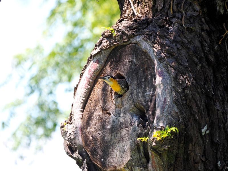 Le nid des pics(Ajoute)++ PB040018_zps97shgngc