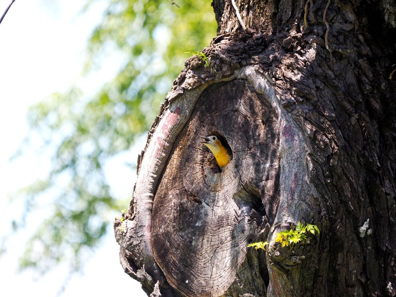 Le nid des pics(Ajoute)++ PB040020_zps5wanopog