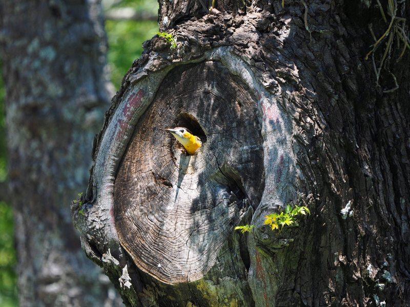 Le nid des pics(Ajoute)++ PB040022_zpskptslvcf