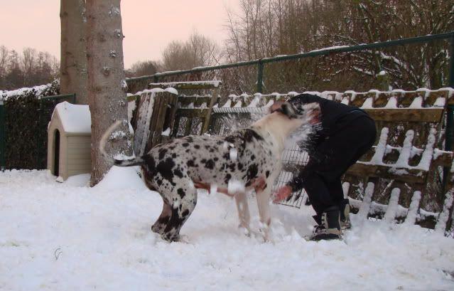 la neige Sneeuwpret_Dackla