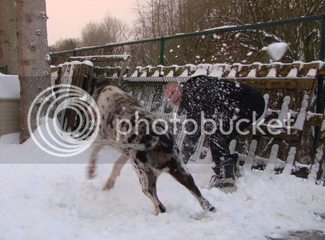 la neige Sneeuwpret_Dackla2