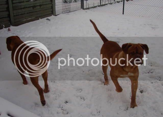 la neige Sneeuwpret_Daydo_Boyke