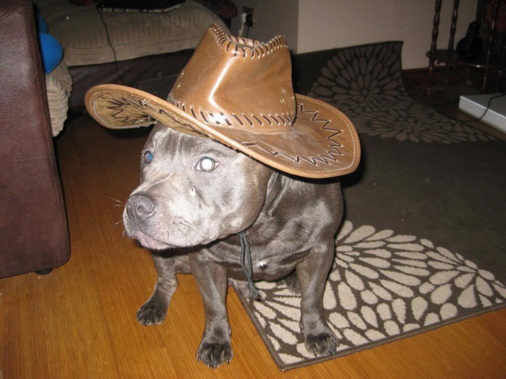 Cowboy Vin  IMG_3086_zps944350f4