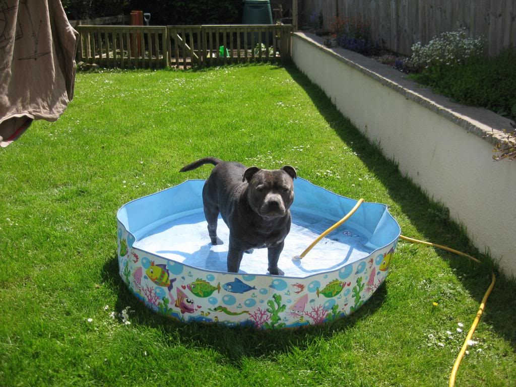 Mums got my pool out yipeee!  IMG_3732_zps653cf7c9