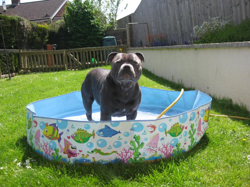 Mums got my pool out yipeee!  IMG_3736_zps81d5636a