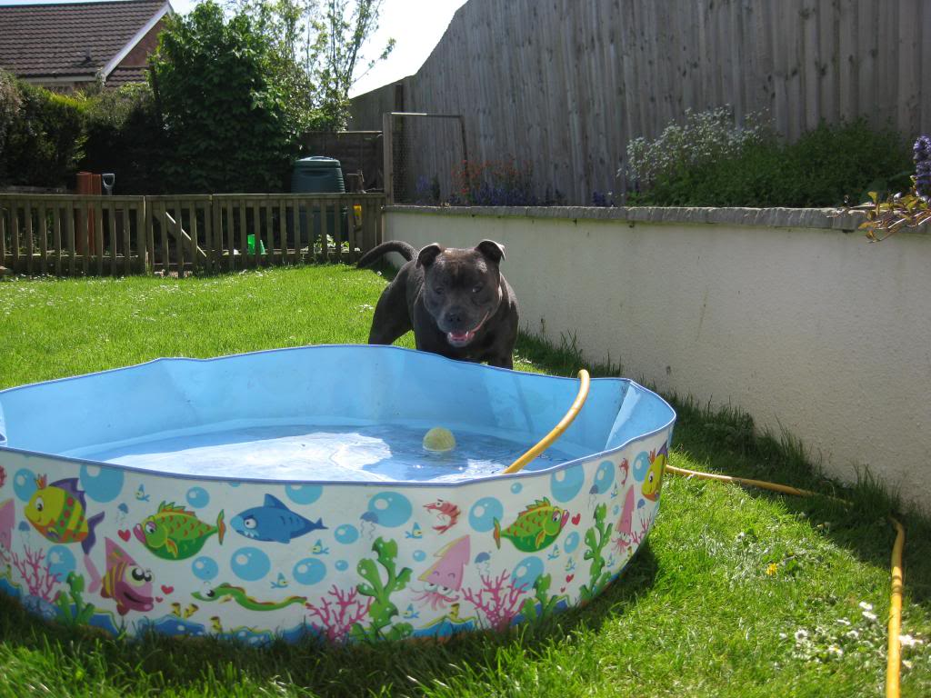 Mums got my pool out yipeee!  IMG_3737_zpsfd7fcf6b