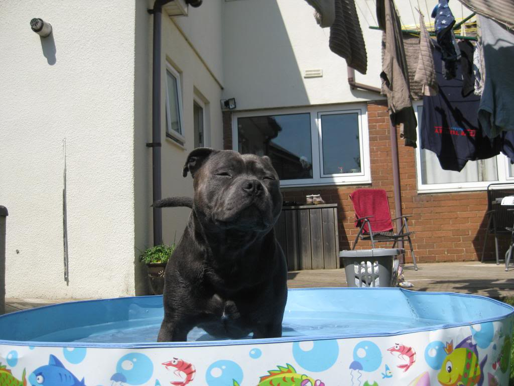 Mums got my pool out yipeee!  IMG_3741_zps4f5a12ac