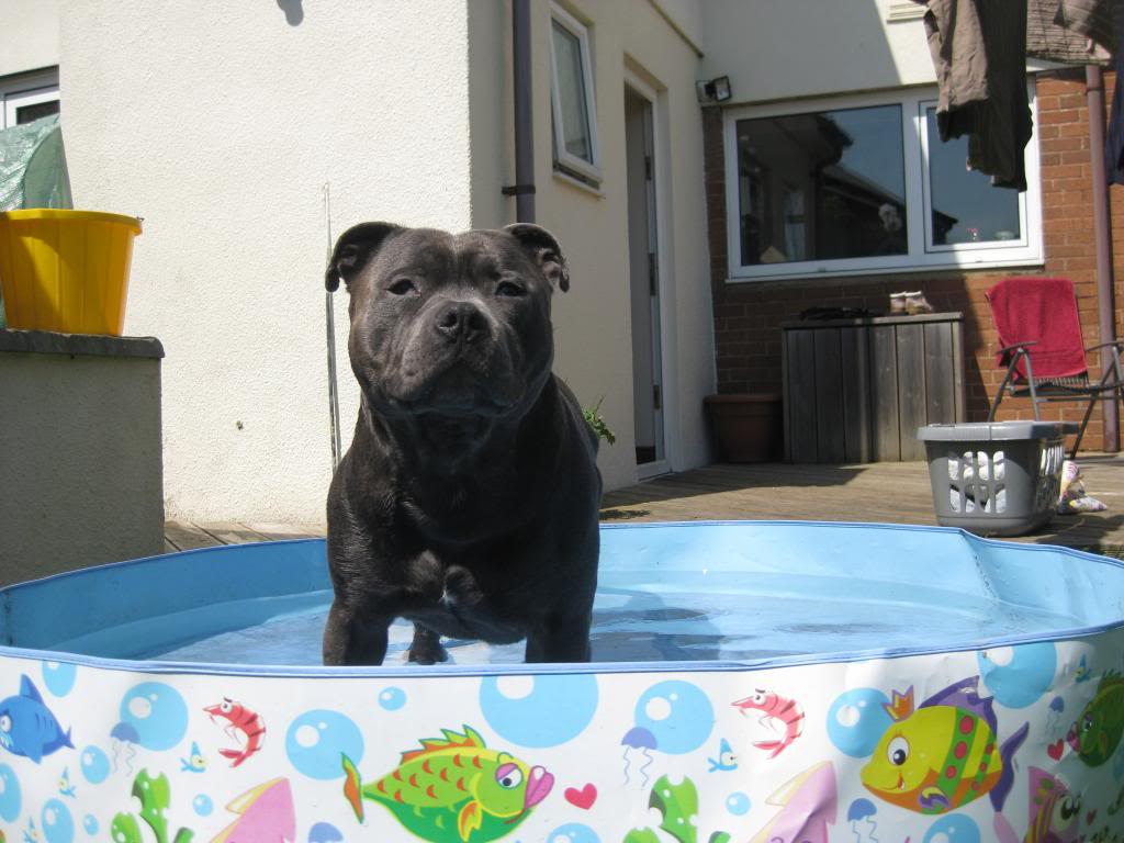 Mums got my pool out yipeee!  IMG_3742_zps3c8d20d7