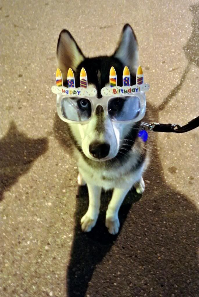 Korra's Best Buddies..Happy Birthday Korra!! - Page 9 DSC_1103-044_zps4f1011dc