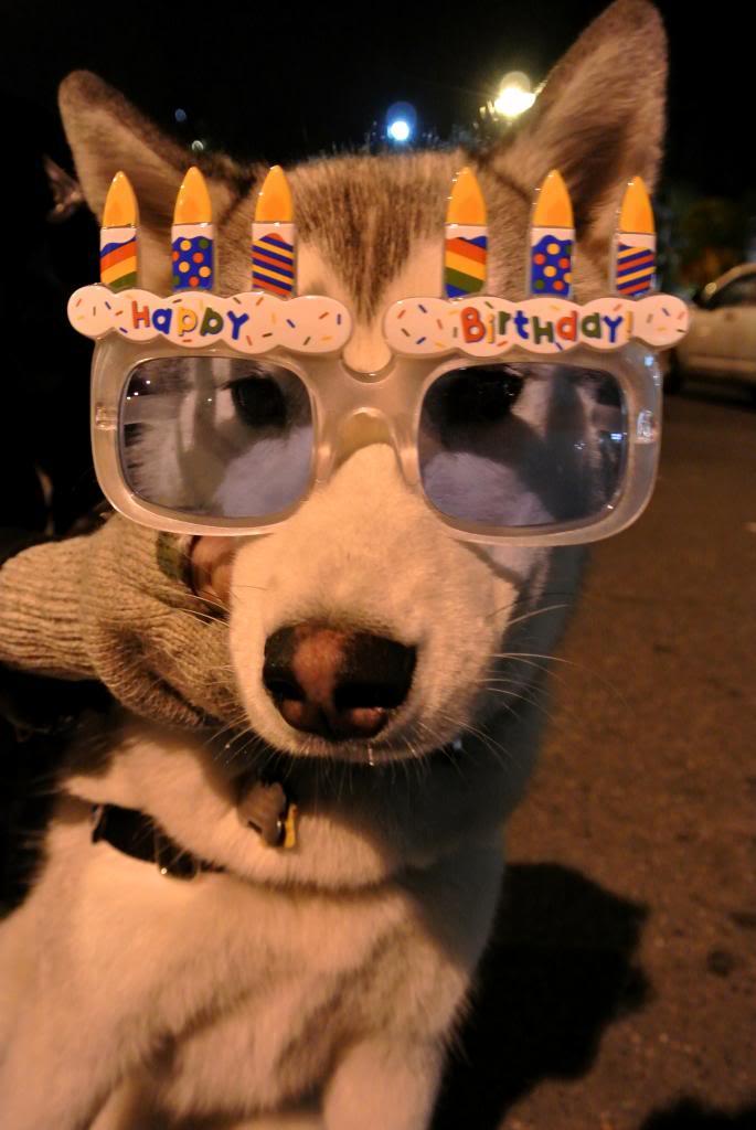 Korra's Best Buddies..Happy Birthday Korra!! - Page 9 DSC_1125-047_zpsa94509a2