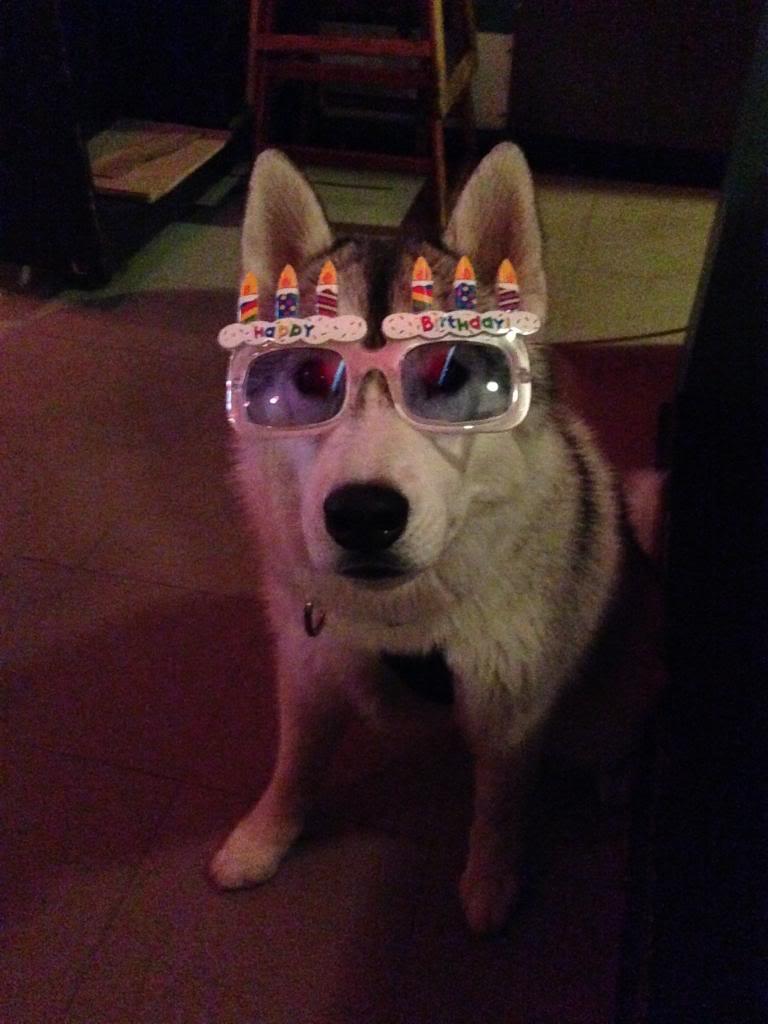 Korra's Best Buddies..Happy Birthday Korra!! - Page 9 IMG_2494_zps4d22411e